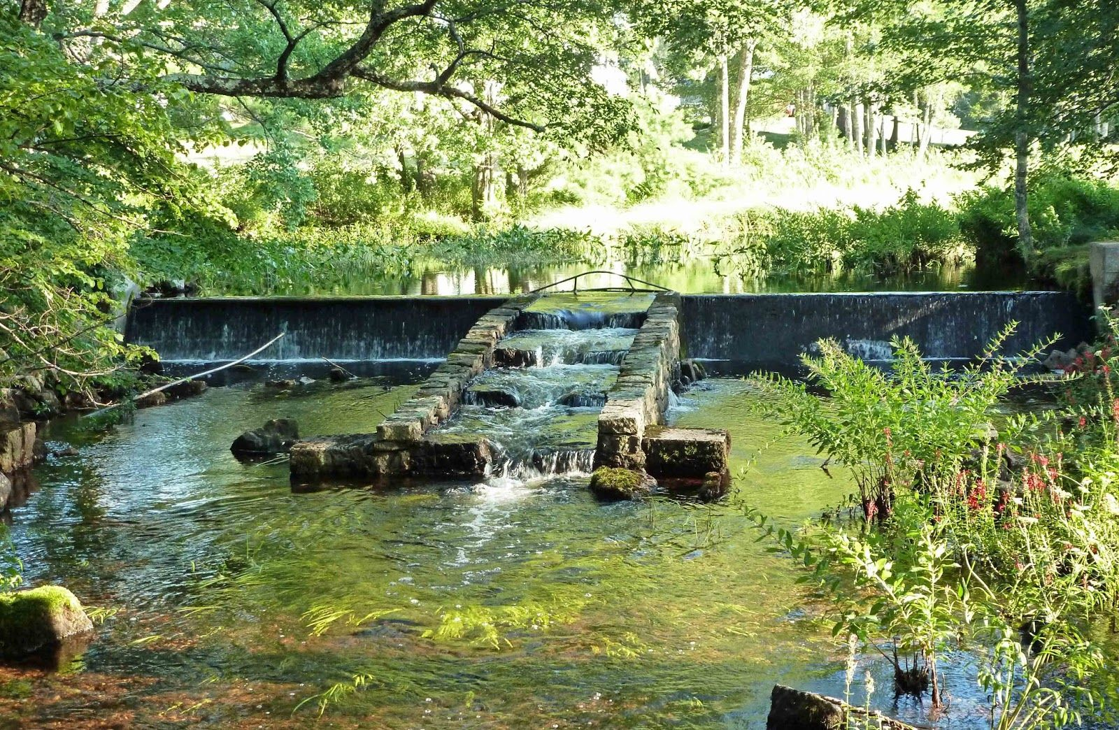 Natural swimming pool with fish displaying 19 images for Koi pond natural swimming pool