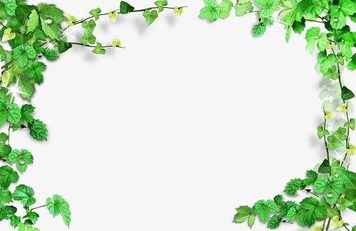صور براويز خضراء اطارات خضراء مفرغة للكتابة صور بطاقات اخضر مجلة رجيم Framed Plants Flower Border Leaf Clipart