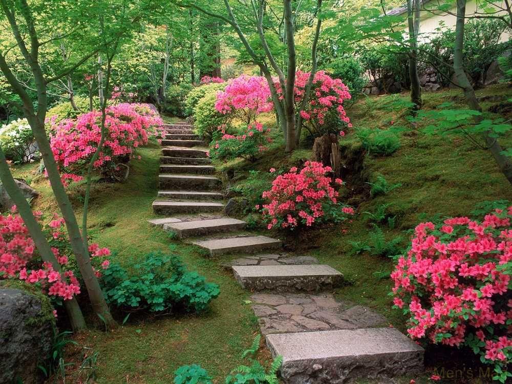 Amazing Garden Pictures