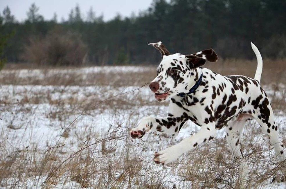 100 Best Dalmatian Dog Names Best Dog Names Dog Names
