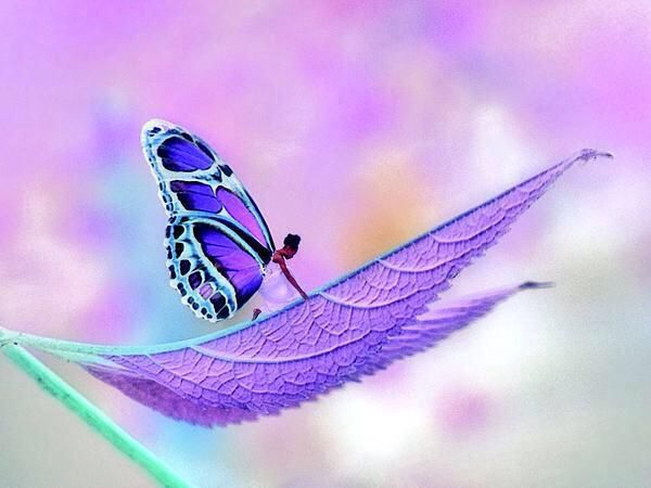 PurpleJules on Twitter