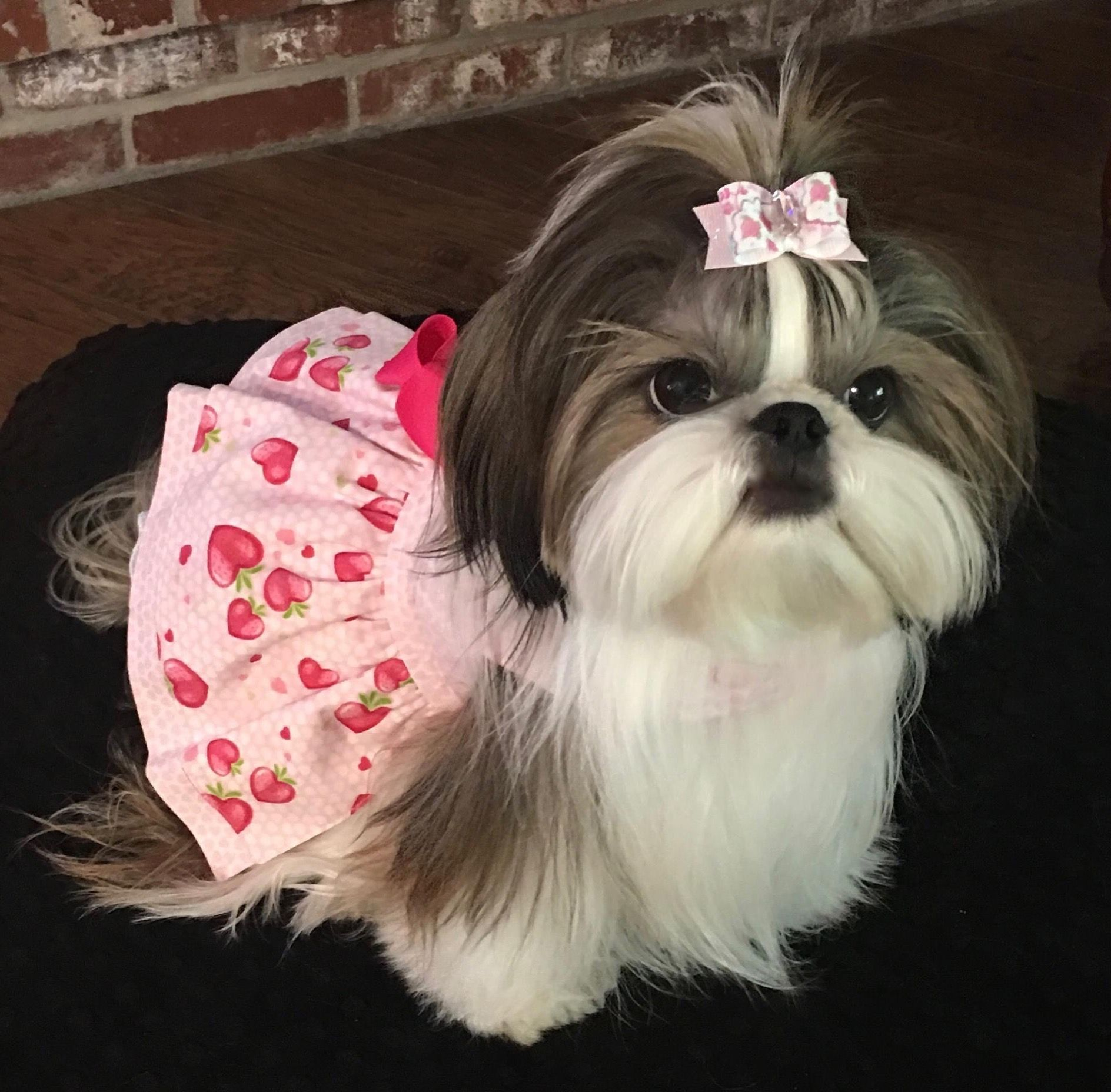 Shih tzu affectionate and playful cute dogs pinterest shih