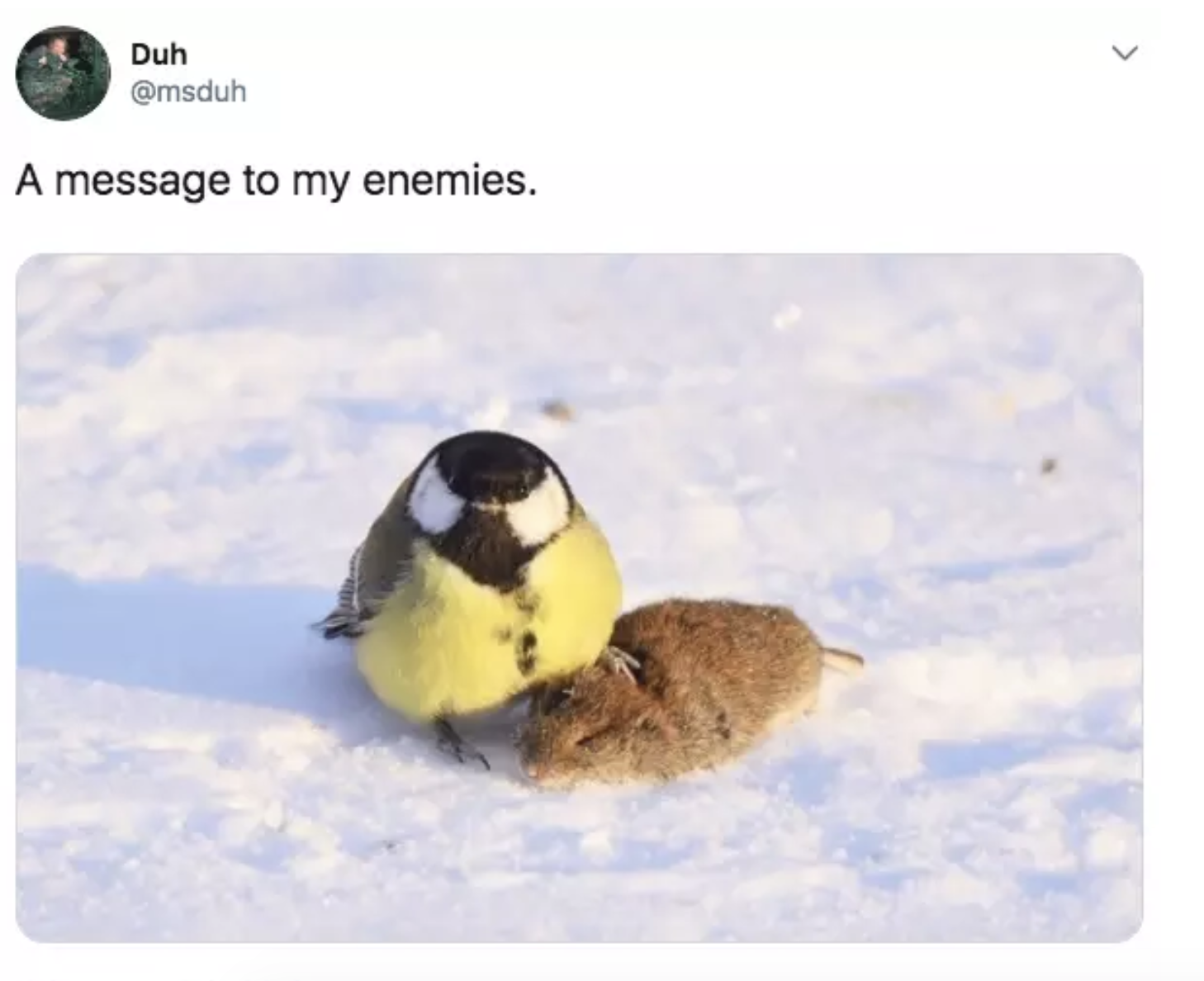 Photo of 45 Bilder und Meme, die dich zum Schreien bringen -: D Pass auf dich auf! -…