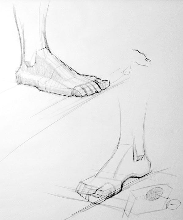 523757_505576159469862_268426761_n.jpg (598×720) | Art - Anatomy ...