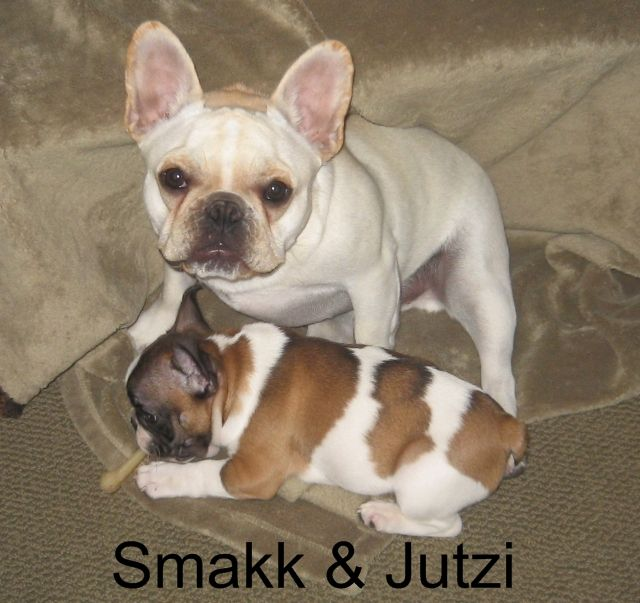 Twice As Nice Bluegrass Frenchies Of Richmond Ky Cute Animals
