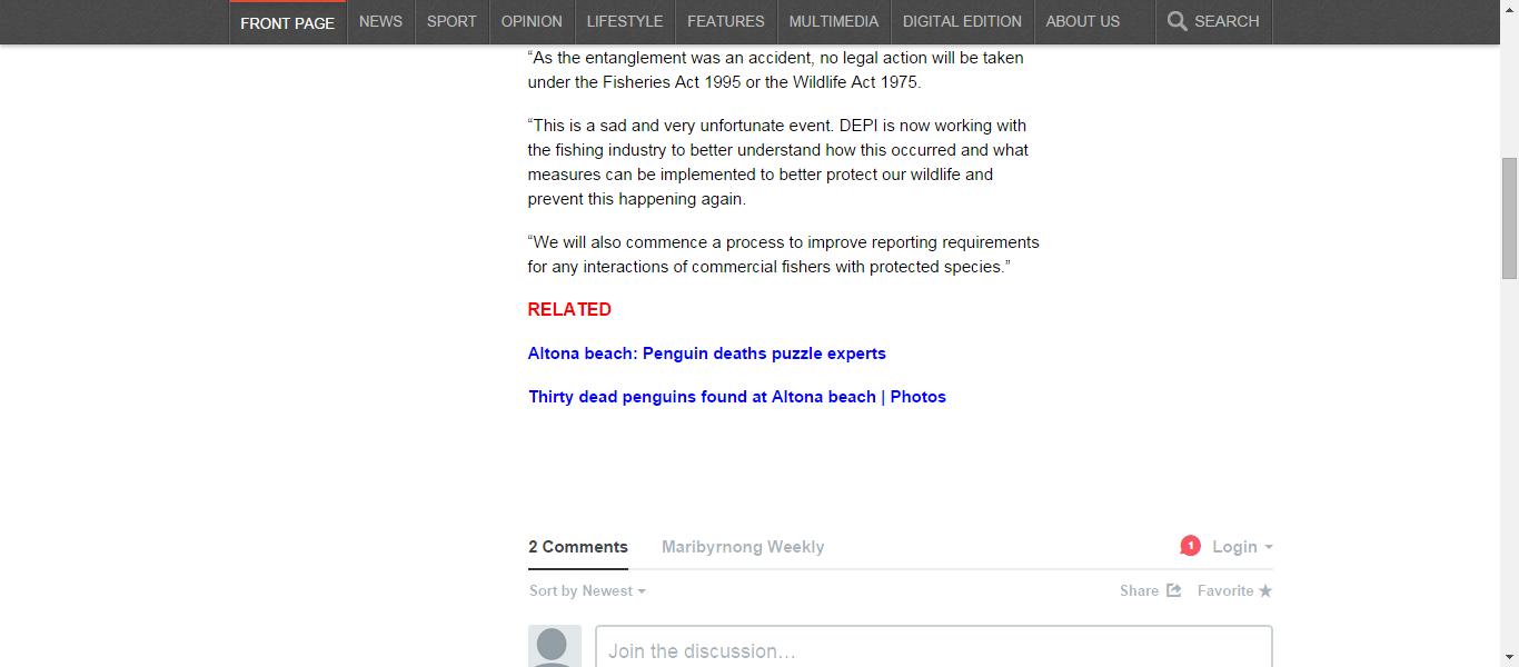 News | Altona beach penguins' death: Fishing net the culprit