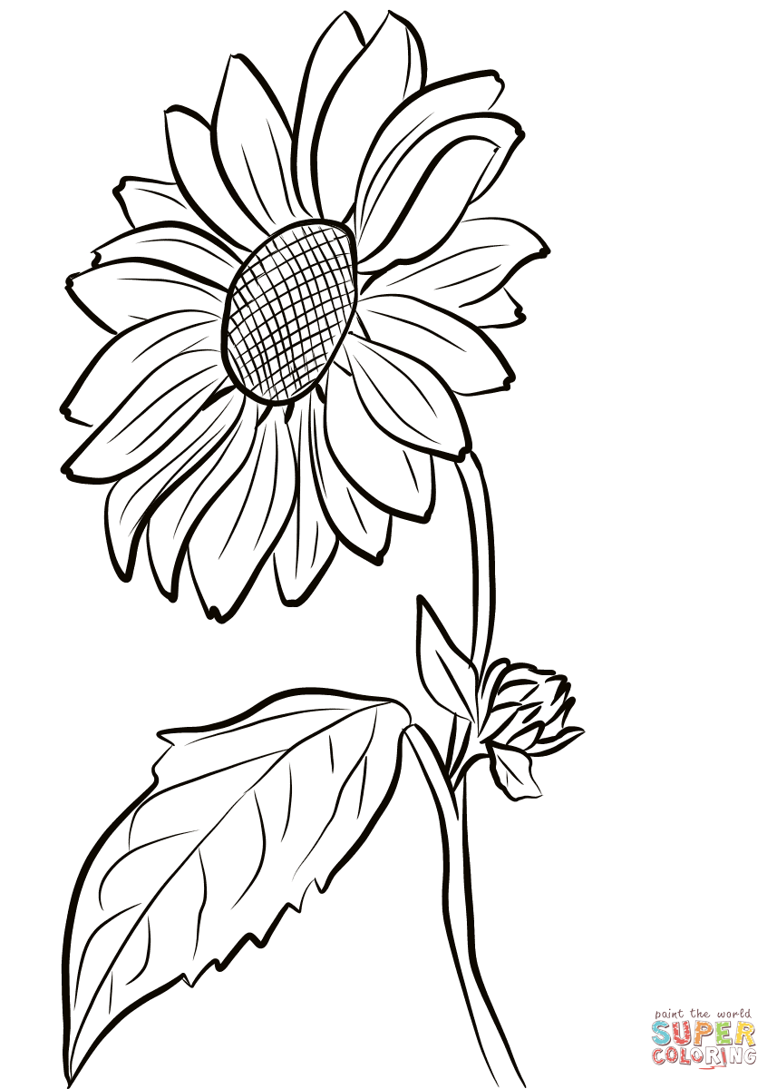 Sunflower Coloring Page Free Printable Coloring Pages Sunflower Coloring Pages Sunflower Drawing Sunflower Stencil
