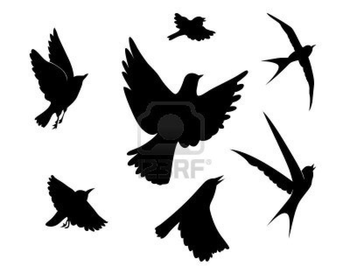 Stock Vector Fliegender Vogel Silhouette Vogel Silhouette Und Vogel Zeichnen