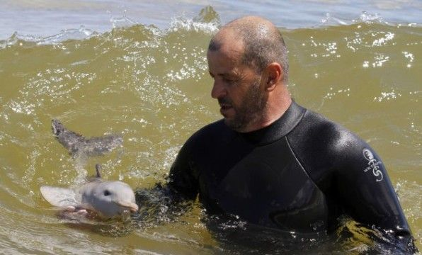 comunicare con i delfini: presto sarà possibile!