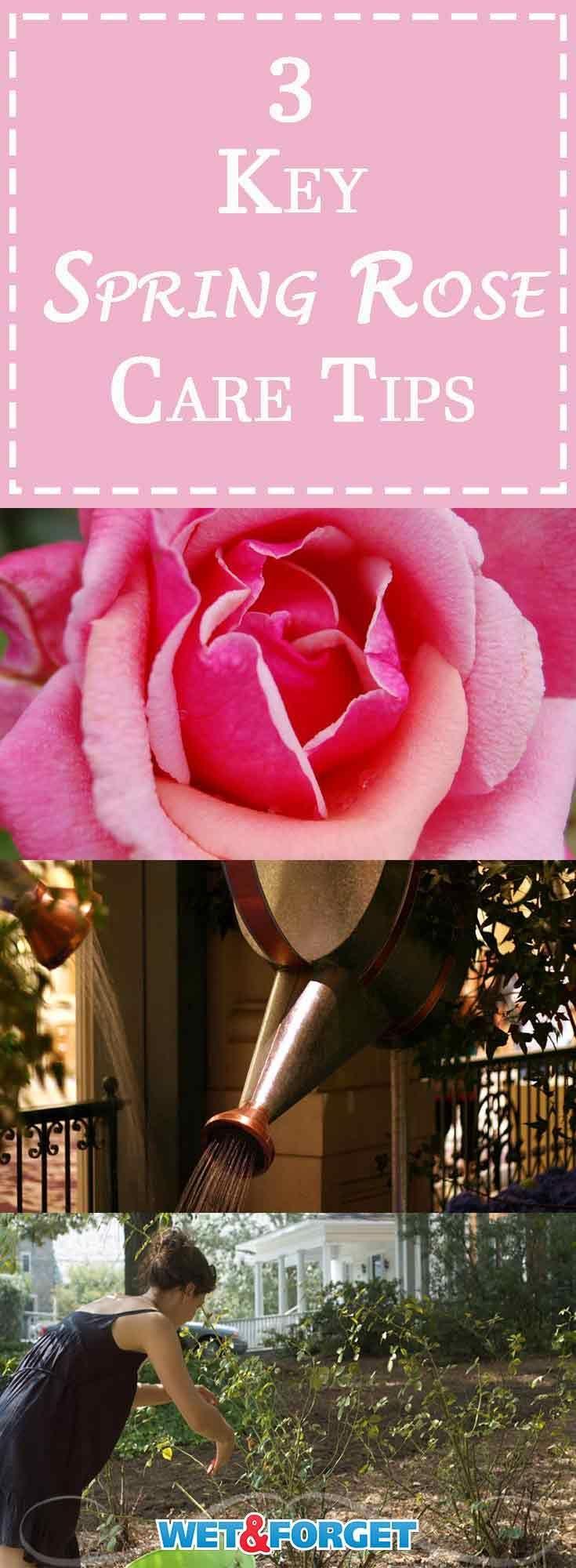 Alles Rose & kein Dorn! 3 wichtige Pflegetipps für