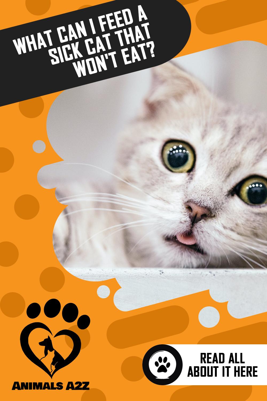 Pin On Cats Kitten Cat Facts