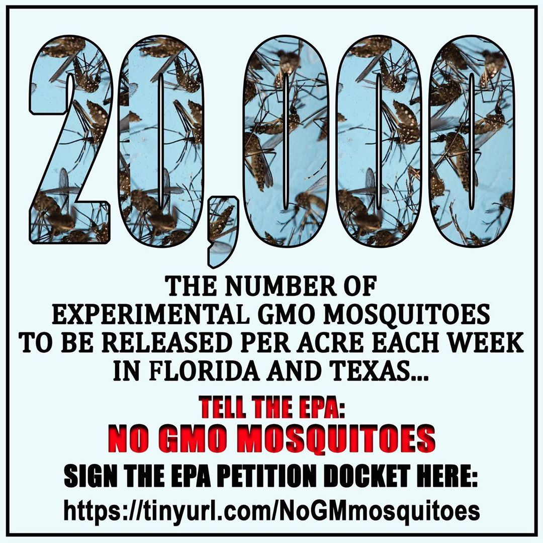 Last day to say no to gmo mosquitoes sign the epa