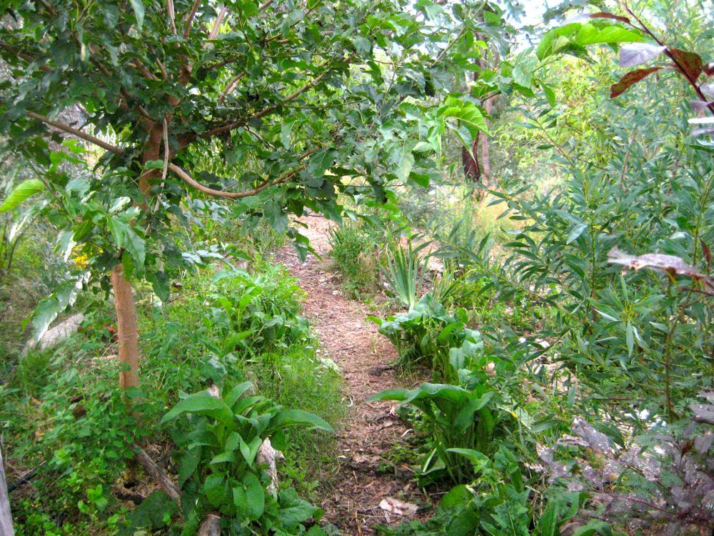 Home | Forest garden, Permaculture, Permaculture design