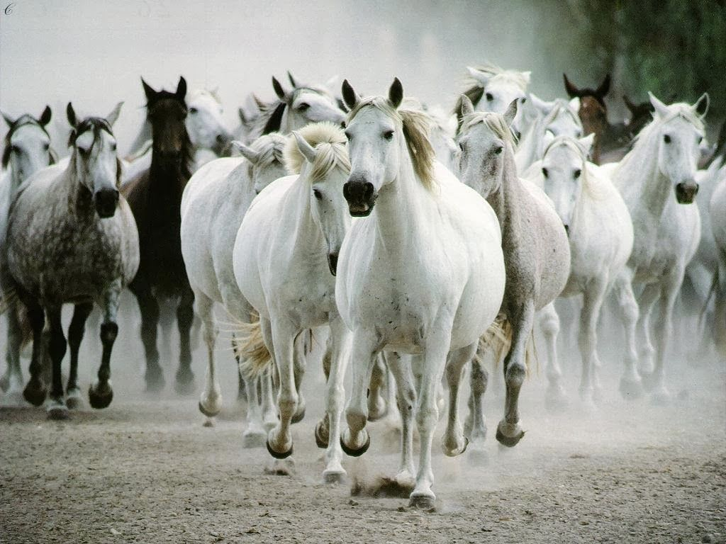3d Animal Background Hd Wallpapers Wild Horses Running Horse