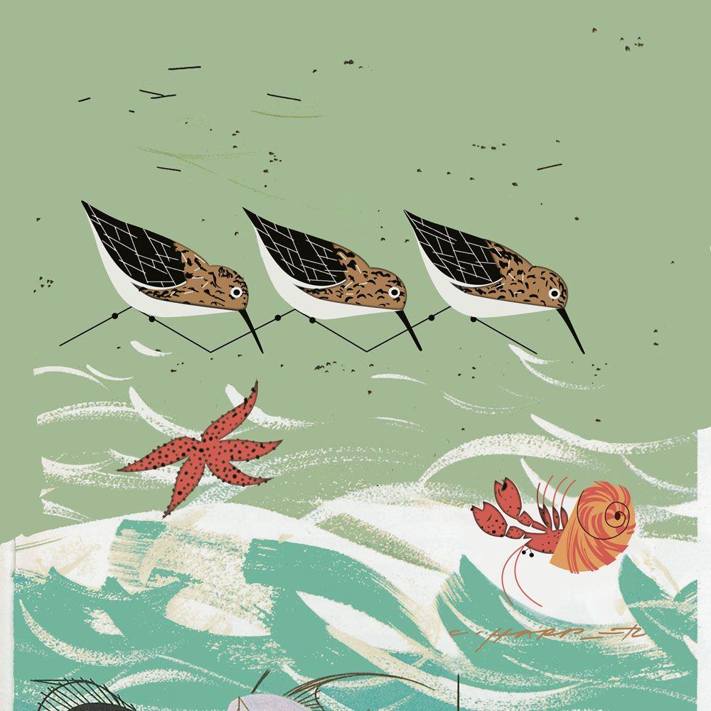 Beach Birds by Charley Harper   Charley Harper   Pinterest   Dibujo