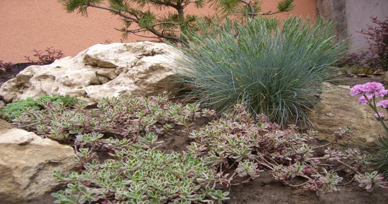 Selecci n de plantas para rocallas jardines pinterest for Plantas para rocallas