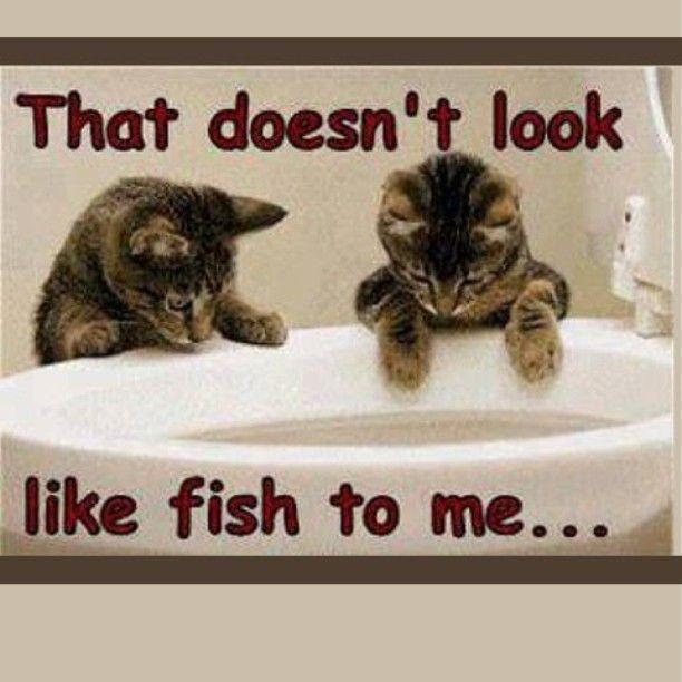 Funny!! fishing walleye walleyefishing pike
