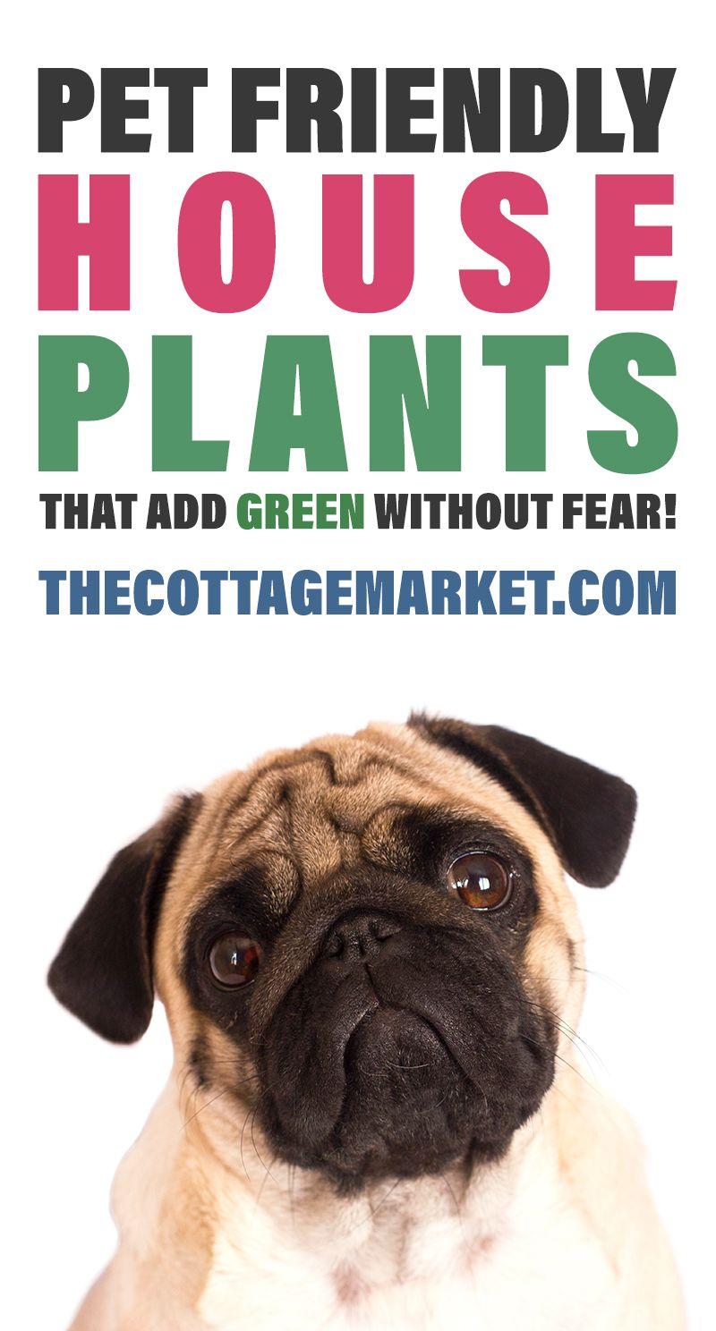 Pet Friendly Houseplants That Add Green Without Fear Houseplants