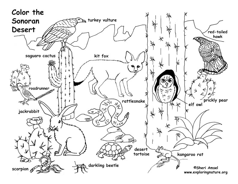 Desert Sonoran Simple Coloring Page In 2020 Desert Animals Coloring Desert Animals Animal Coloring Pages