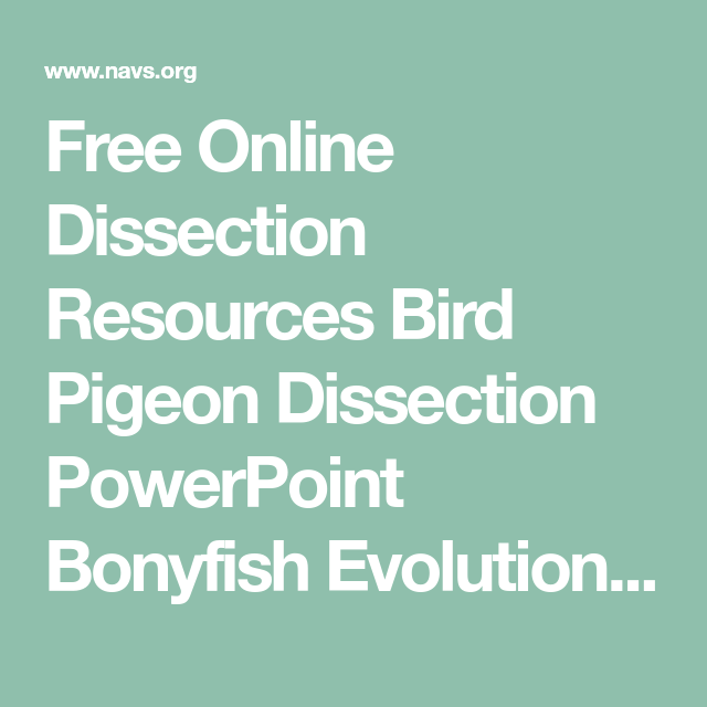 Free Online Dissection Resources Bird Pigeon Dissection