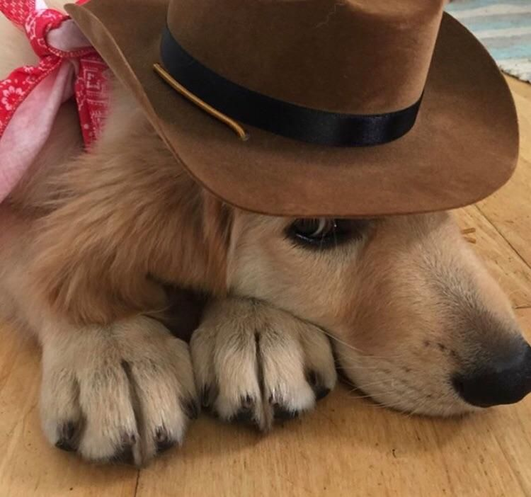 hes ready to wrangle in all this candy tonight