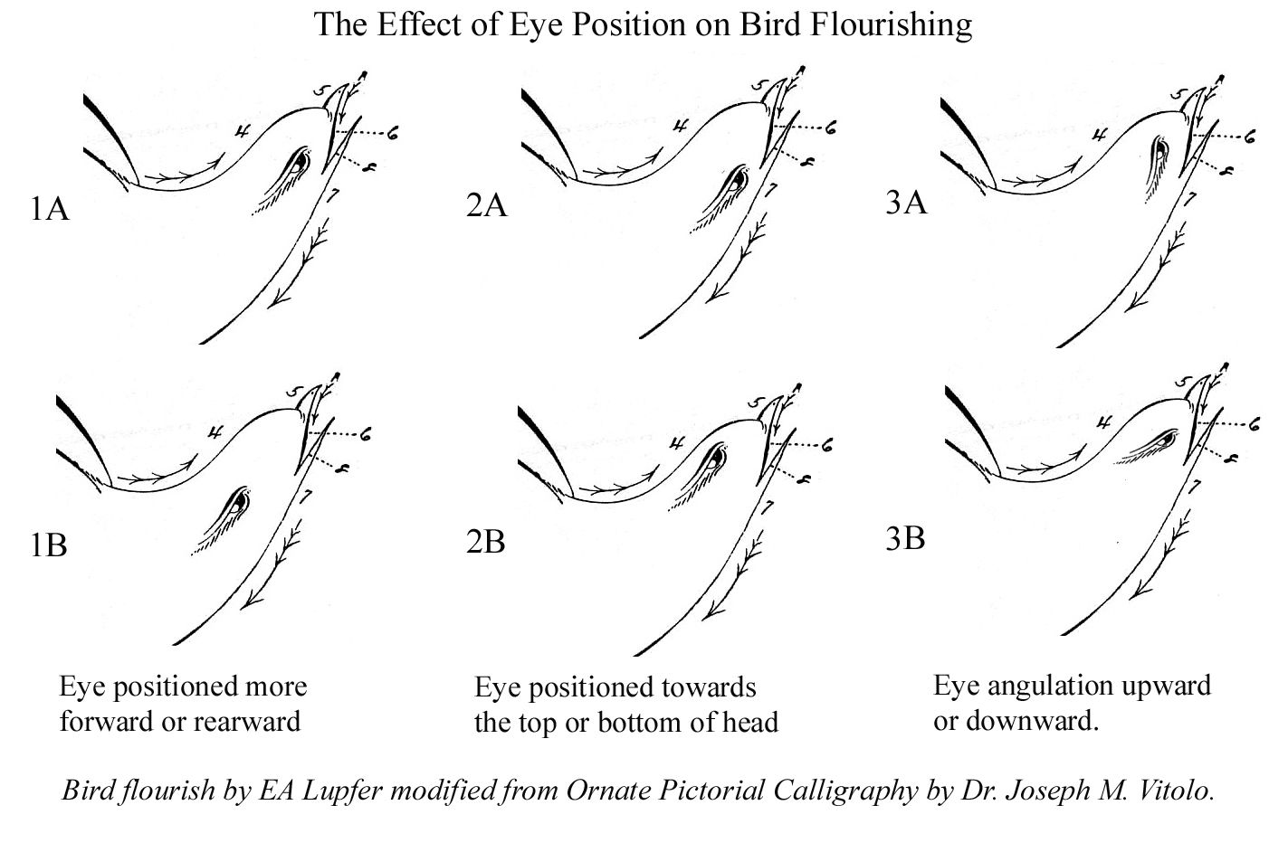 Effect Of Position Of Bird Eyes