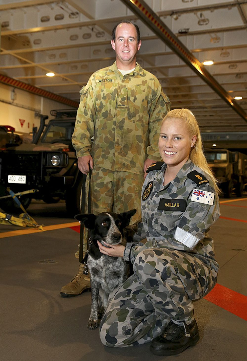 Military dogs worth a berth Military dogs, Ships cat, Dogs