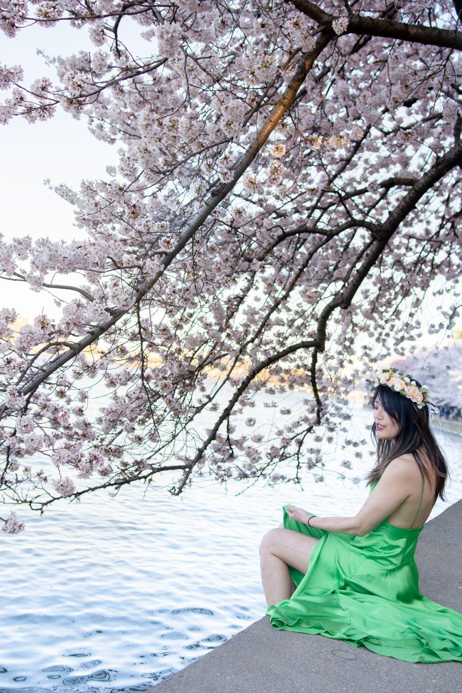 The 2021 Guide To Washington Dc Cherry Blossom Peak Bloom Cherry Blossom Dc Pictures Of Washington Dc Cherry Blossom Festival