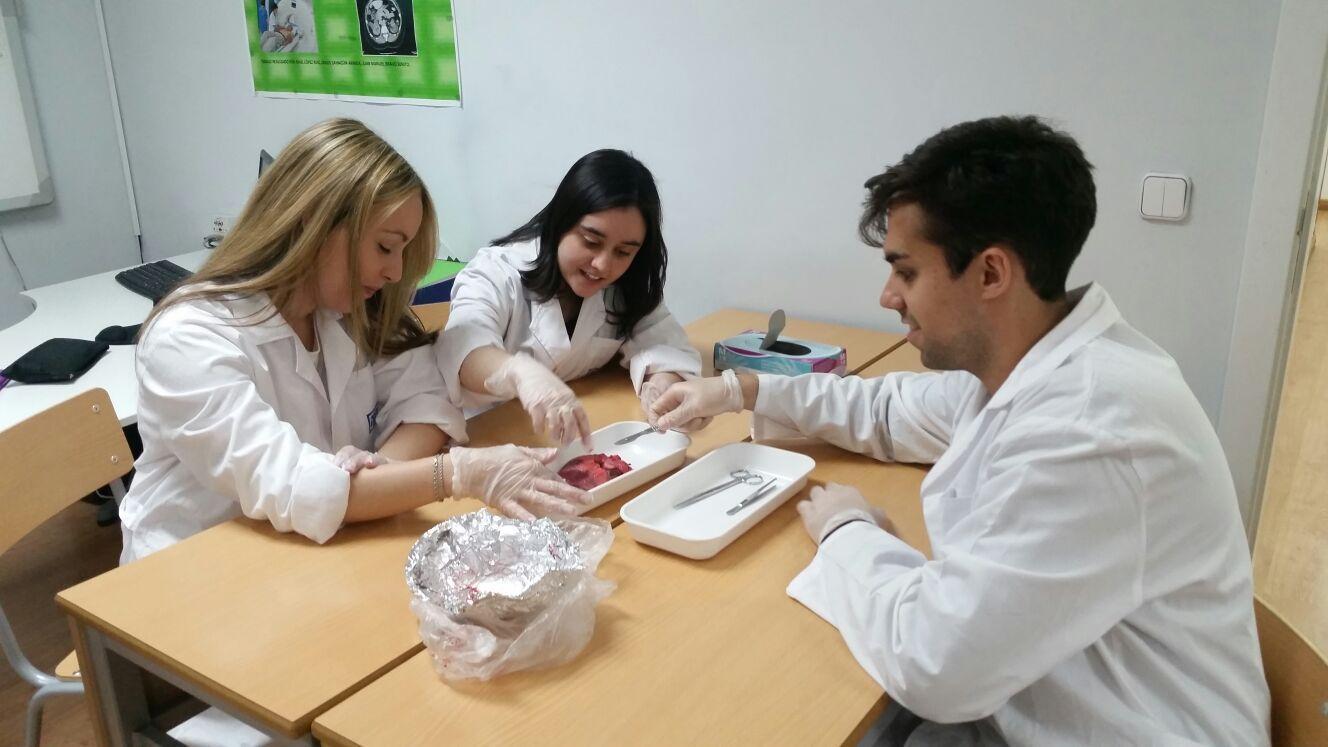Famoso Anatomía Cerdo Fetal Y Funciones Inspiración - Anatomía de ...