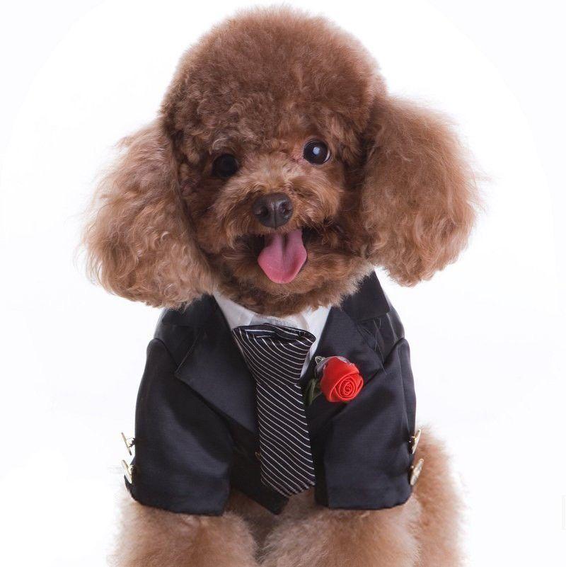 Dog Wedding Tuxedo in Black | four legged friends | Pinterest ...