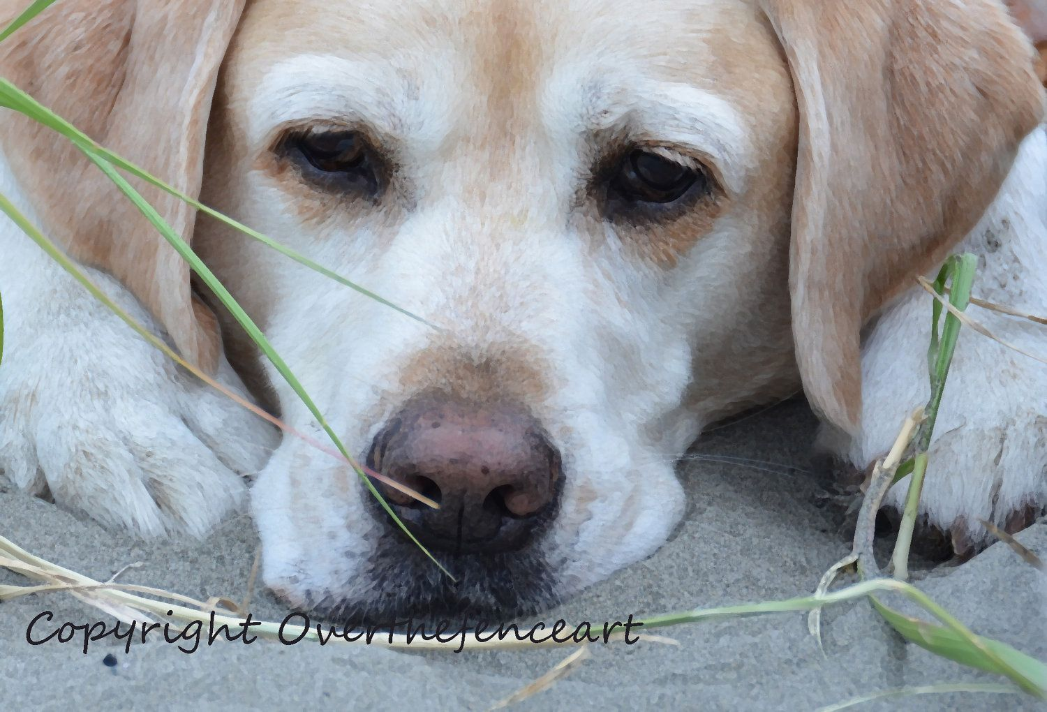 Dog card yellow labrador handcrafted photo greeting card