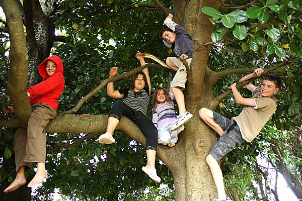Image result for preschoolers climbing a tree