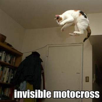 b516ca1b1023f1547b8dbd8704ff8061 cat body language cat instructions pinterest language, cats,Body Language Funny Memes