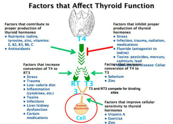 7 Reasons Your Thyroid Lab Tests Are Anything But Normal Thyroid
