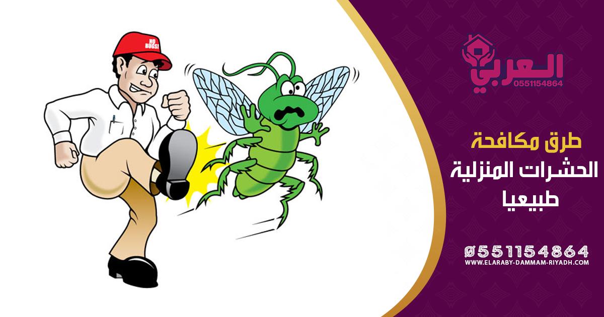 طرد الحشرات من البيت باستخدام النباتات الطبيعية Riyadh