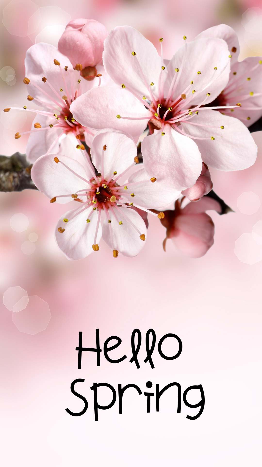 Spring Wallpaper for Your Phone | Spring wallpaper, Hello ...