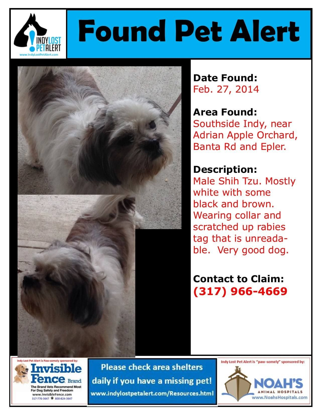 Founddog 2 27 14 Indianapolis In Male Shihtzu White Black Brown Collar Banta Rd Epler 317 966 4669 Losing A Dog Find Pets Black And Brown