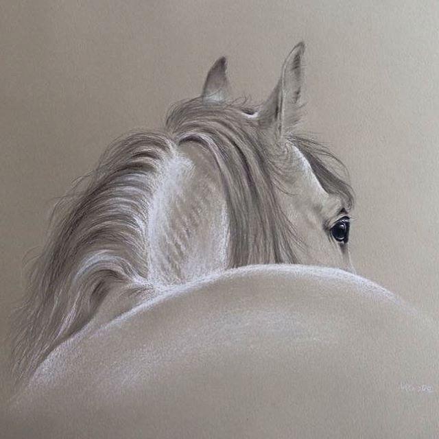 "Moore Fine Arts on Instagram: ""Horse in Pencil & White Chalk #richardmoore #artist #art #horse #horsedrawing #sketch #blackandwhite #horseart #imaginationartsblog…"""