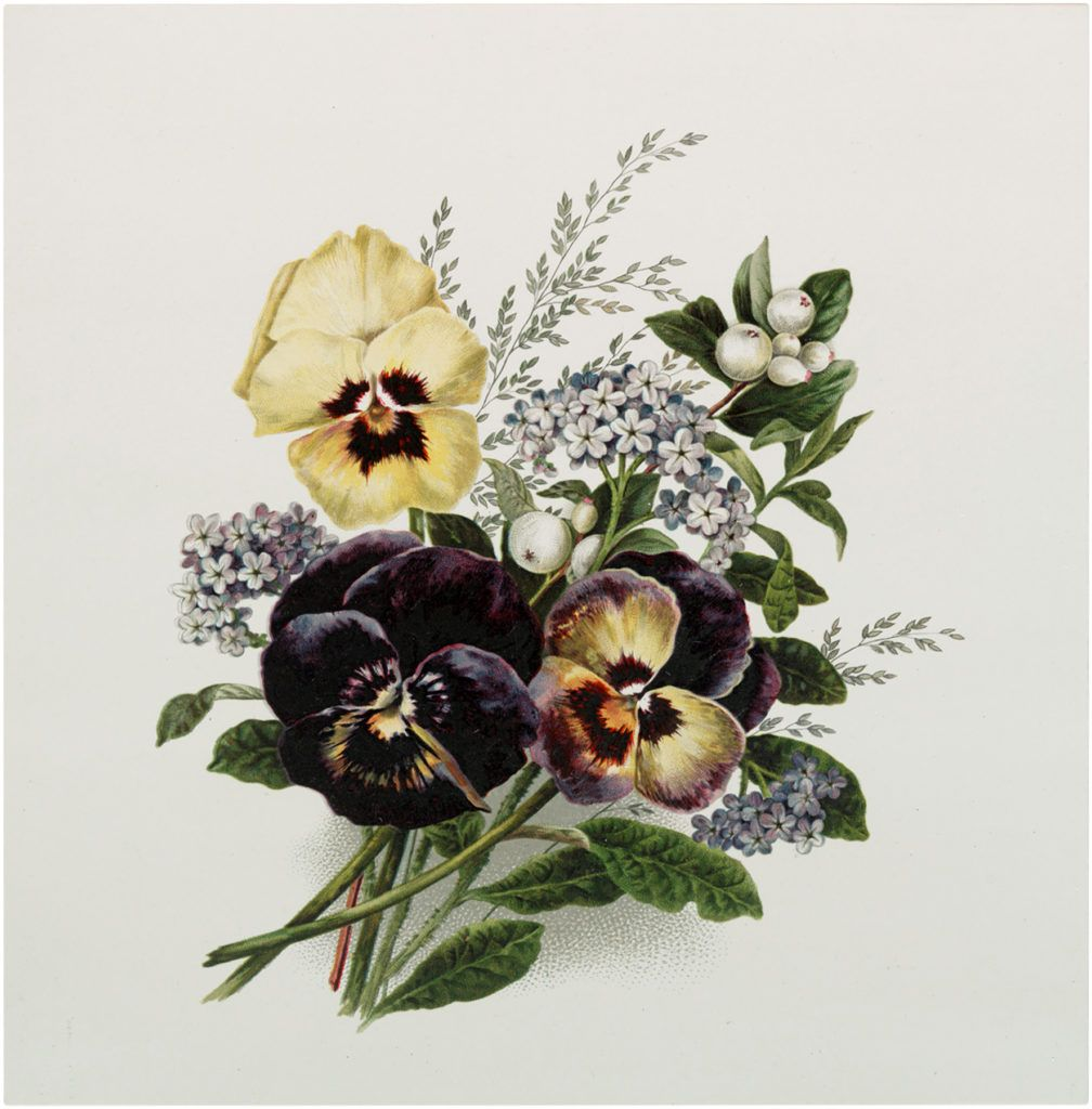 9 Pansy Flower Images Pansies Flowers Pansies Art Pansies