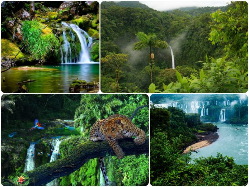 M s de 25 ideas incre bles sobre selva amazonica en pinterest animales selva tropical amazonas - Mas goy fornells de la selva ...