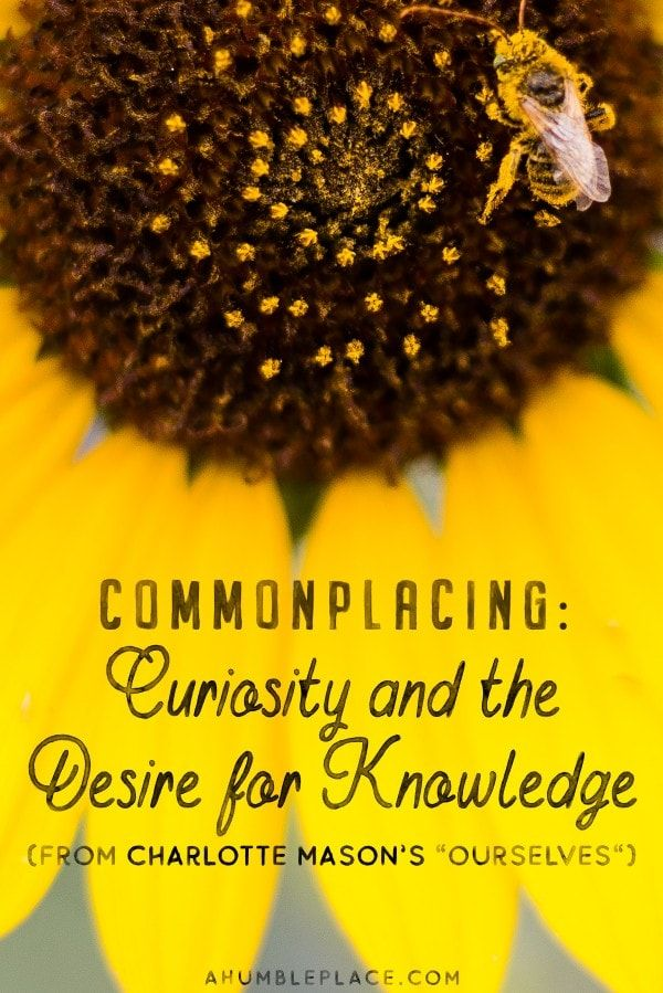 What did Charlotte Mason have to say about curiosity vs. a desire for knowledge? And how does that relate to us today? #charlottemason #commonplace