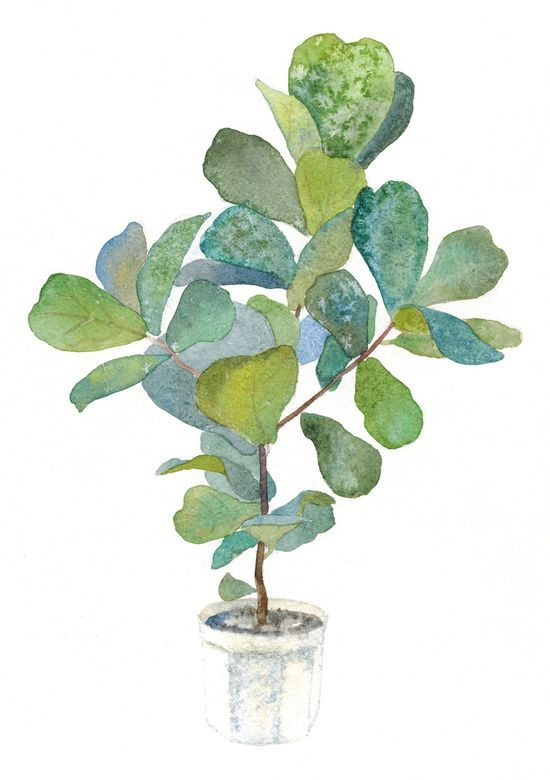 Fiddle Leaf Fig Tree Art Print Tree Art Tree Collage Plant Art