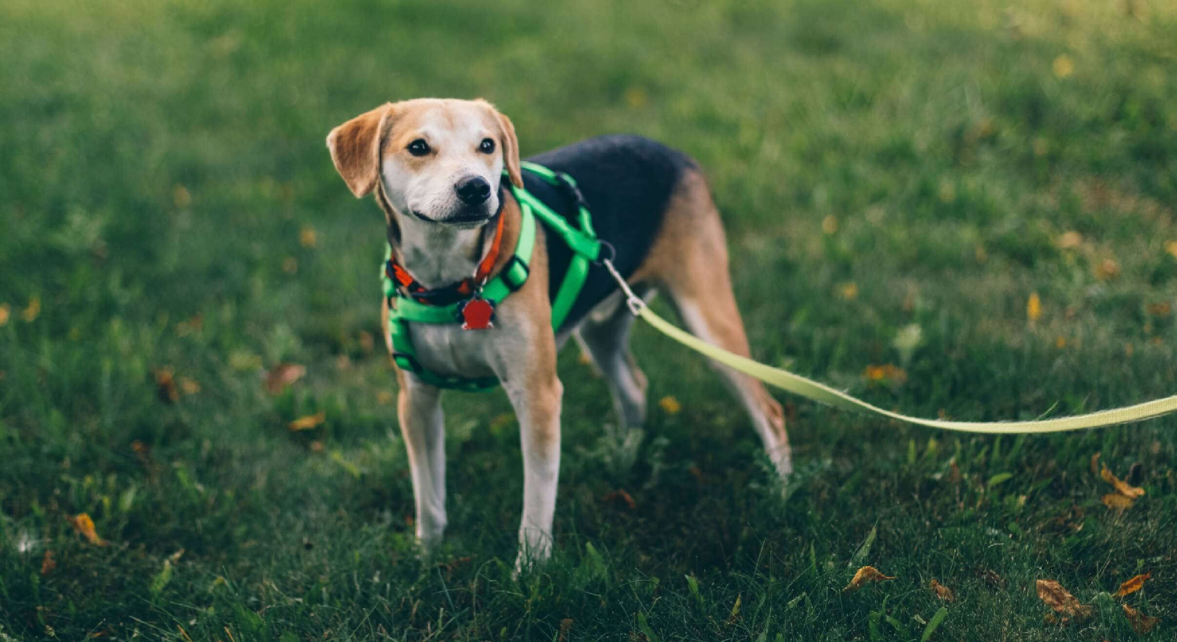 Why Dogs Wipe Their Paws After Going To The Bathroom Dogs Dog Walker Dog Activities