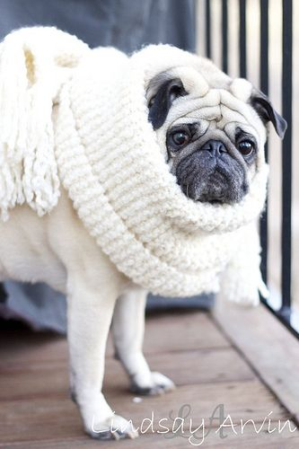 15 Adorable Wildlife Puppies For National Puppy Day Puppy Day Baby Pugs National Puppy Day