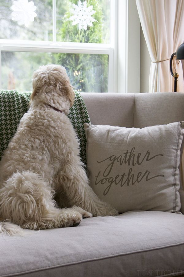 Jack the Goldendoodle - The Inspired Room Christmas House Tour
