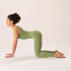 Cow Pose | Cow pose yoga, Cow pose, Prenatal yoga poses
