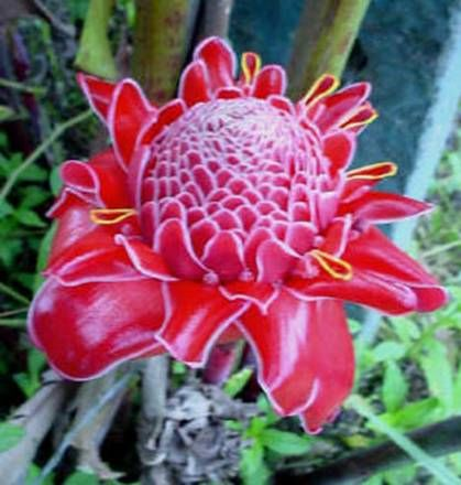 Animals For > Tropical Rainforest Biome Plants | Places To Go ...