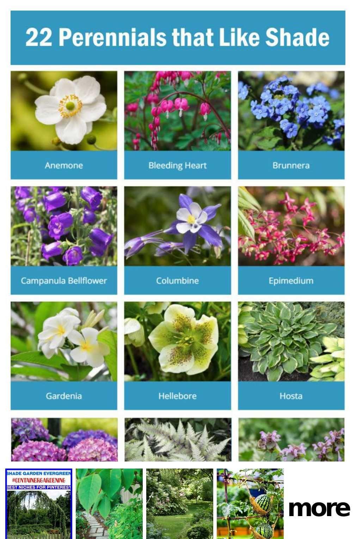 Pin On Garden Lovers