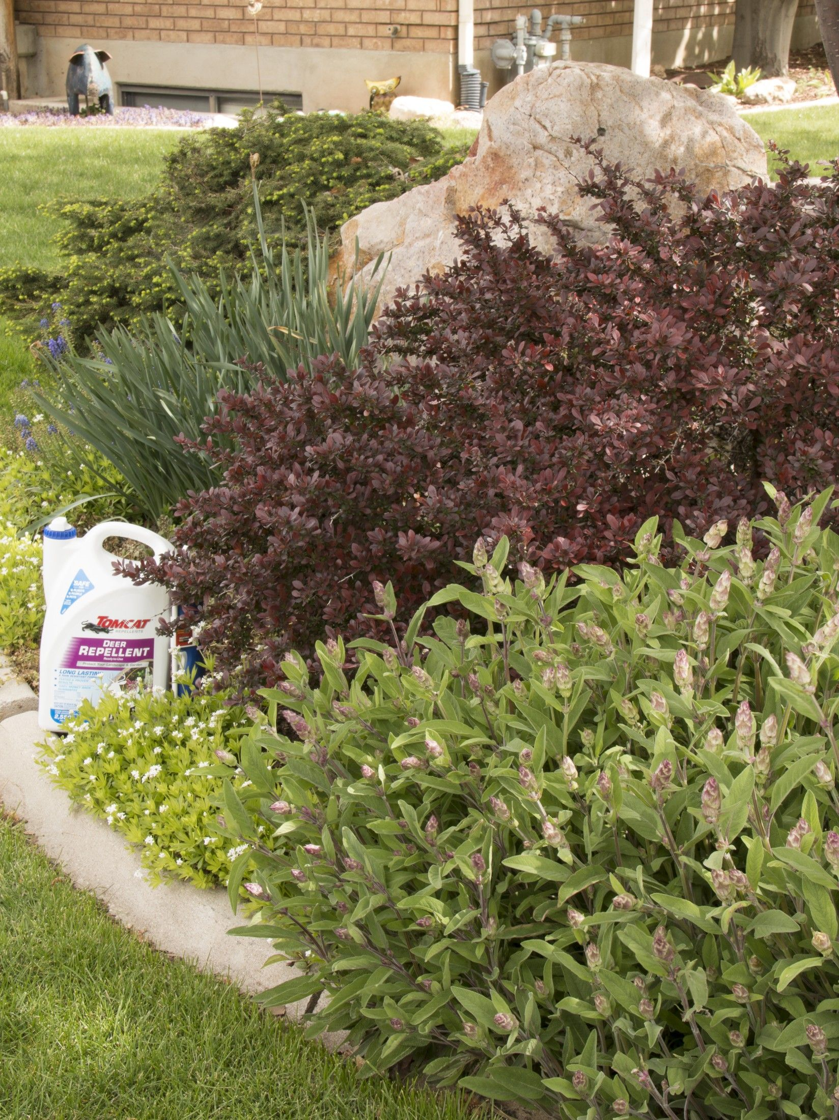 deer repellent for gardens. [ad] Spring Is In Full Bloom! The Last Thing We Want For Deer Repellent Gardens