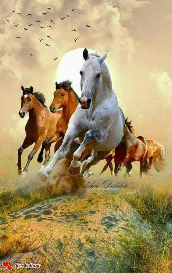 Cavalo حصان Wild Horses Running Horse Love Horse Painting